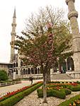 Внутренний сад перед Голубой мечетью