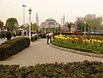 Смоковницы в цвету площади Султан Ахмет