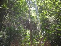 Джунгли острова обезьян