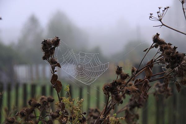 Верхнее Поволжье встречало туманом