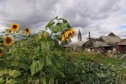 Огородные солнца
