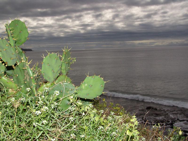 Немного фотодрочерства с азорскими кактусами