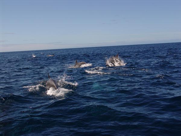 Порою вода вокруг лодки просто кипела от количества дельфинов