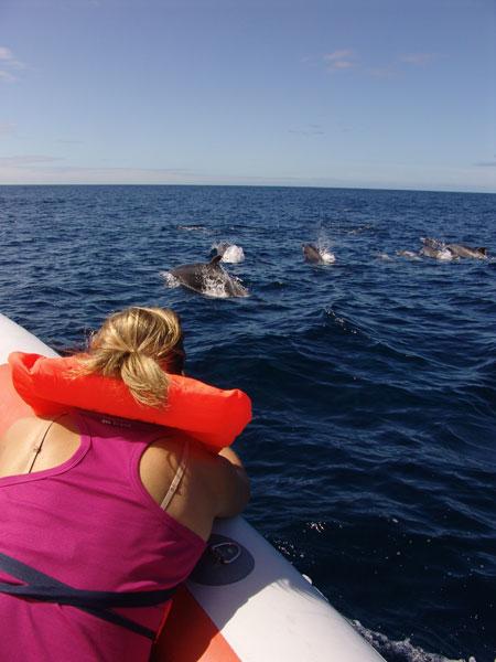 Дельфинов прикалывало плыть по курсу нашей лодки