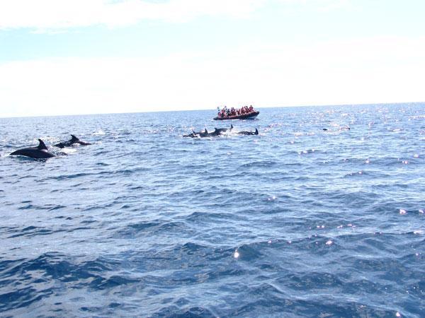 Причем лодку дельфины окружают со всех сторон
