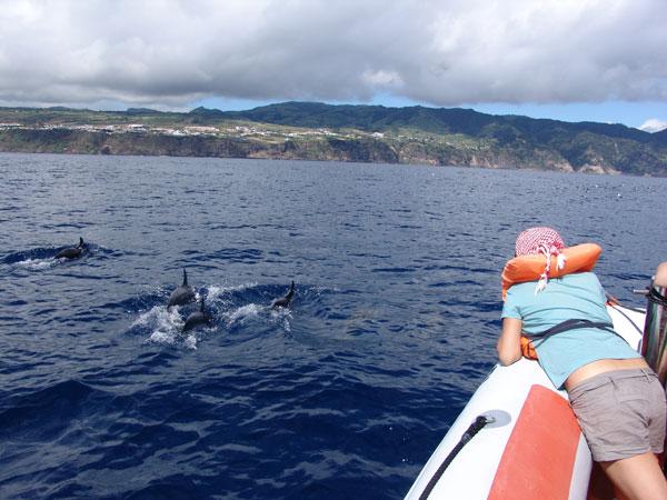 К лодке дельфины подходят практически вплотную