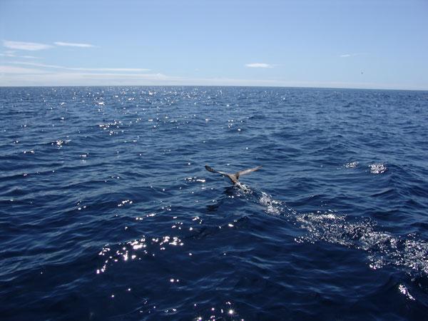 По взлетающим птицам мы понимаем, что косяк рыб меняет дислокацию