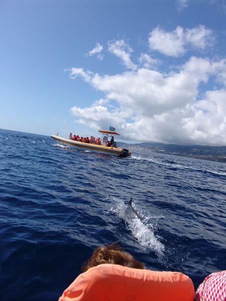 И следом за косяком отчаливаем мы с дельфинами