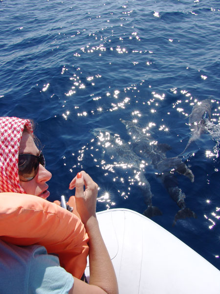 Проплывая около лодки дельфины позволяют даже трогать их теплые спины